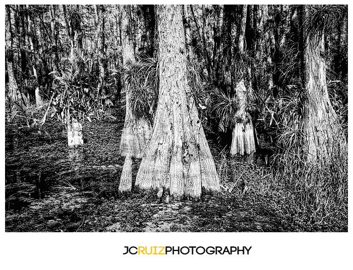 Cypress Strand Big Cypress National Preserve