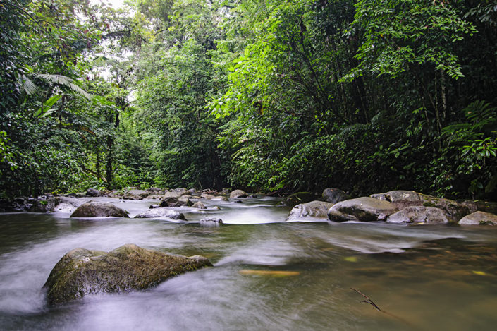 Chachagua Rainforest Ecolodge River