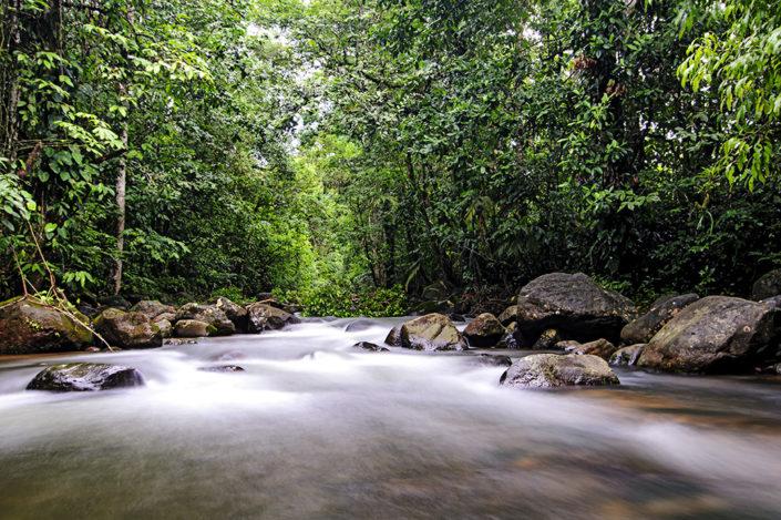Chachagua river
